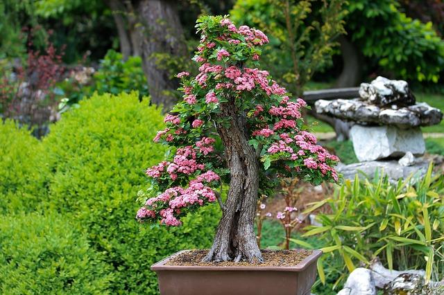 růžové květy bonsaie.jpg