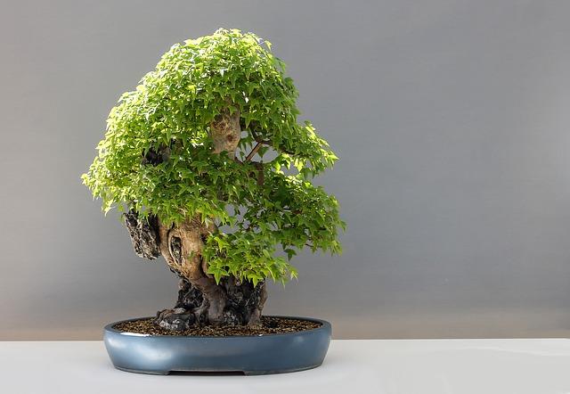 malá bonsai.jpg