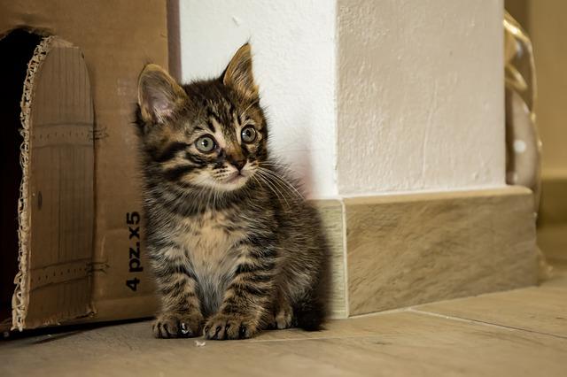 mourovaté koťátko u dvířek