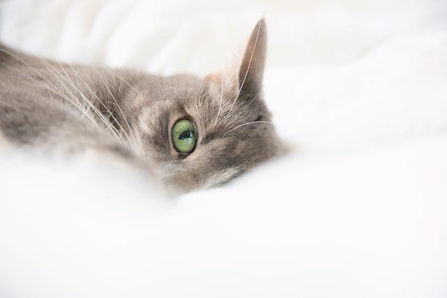 šedivá kočka na dece
