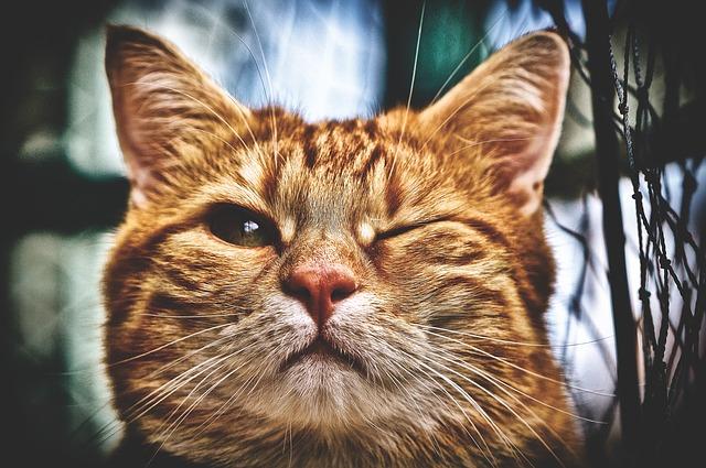 zrzavá kočka mrká