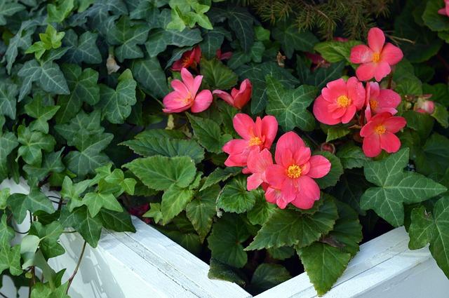 Obrubník u květinového záhonu