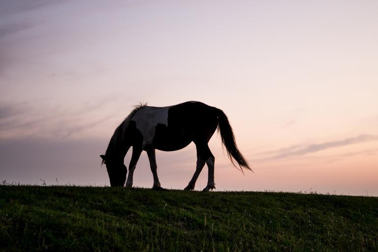 Neosedlaný kůň